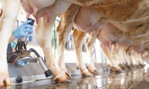 milk_slide3_6